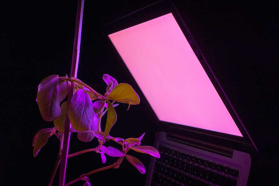 grow_light1.jpg